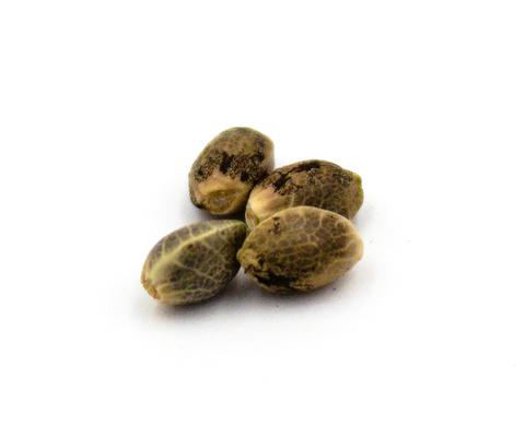Parkland Flower marijuana seeds